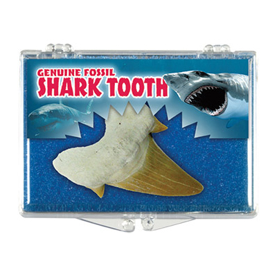 silver streak genuine fossil shark tooth educational box