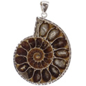 Fancy Ammonite Necklace - Silver