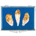 Citrine Points Educational Box